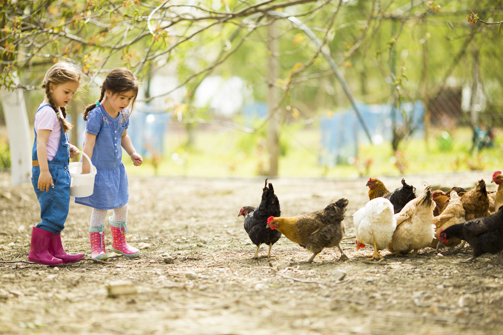 fattoria didattica, bambini